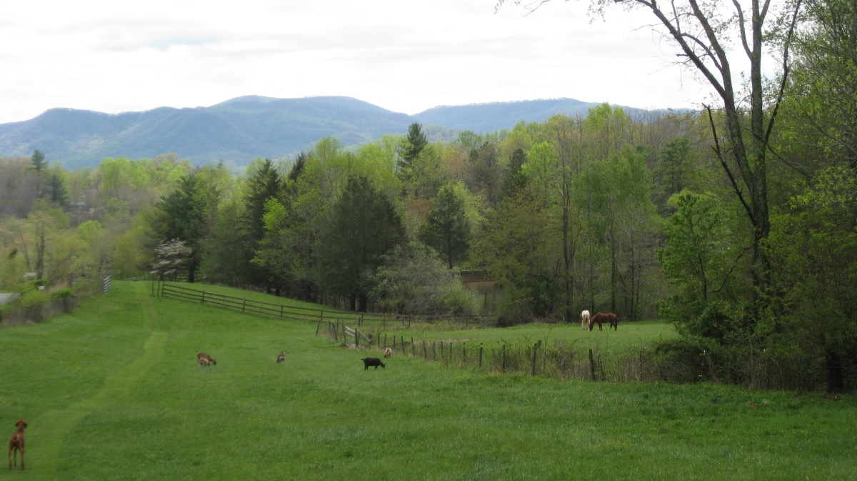 Moores pond farm and vacation rentals french alpine for Farm pond maintenance