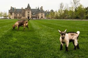 Itsy and the kids visit the Biltmore Estate for 2013 Convention publicity